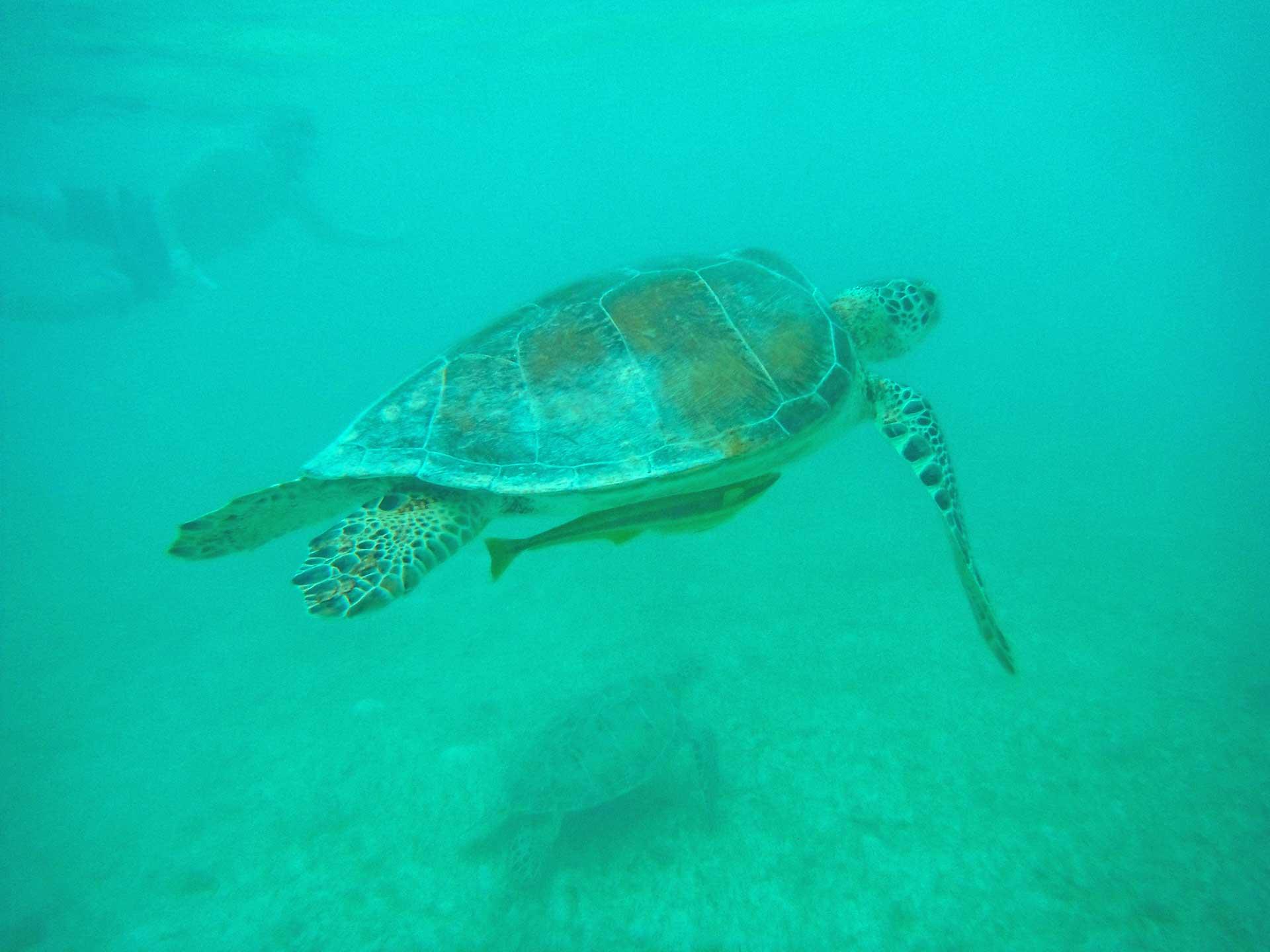 Reise Dich frei • schwimmen mit Schildkröten in Mexiko