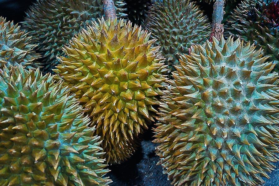 Durian Frucht stinkfrucht