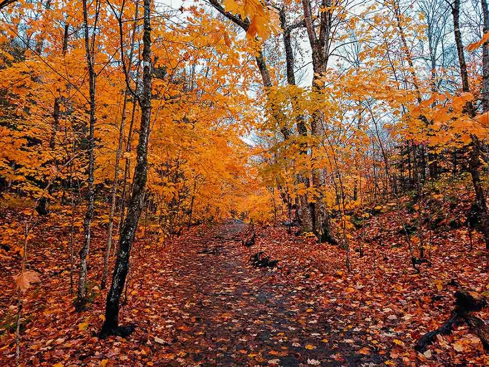 Herbstwald Steinpilze finden