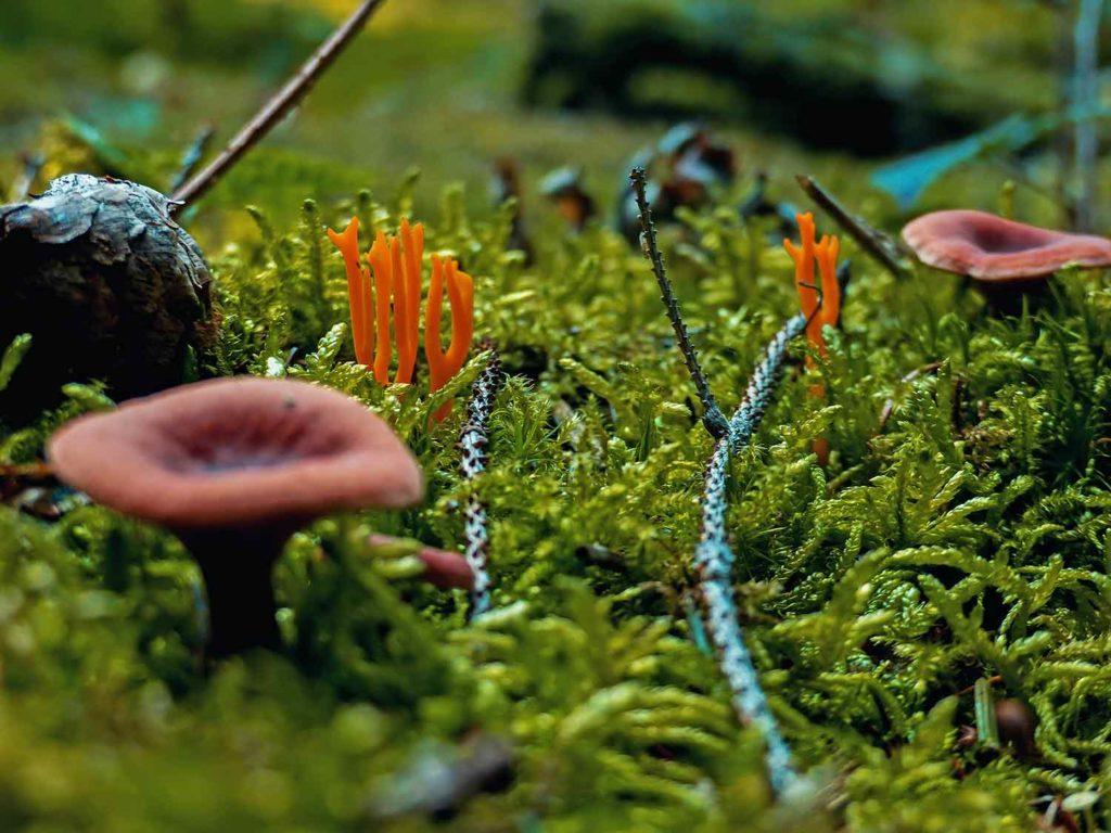 Pilze im Wald finden