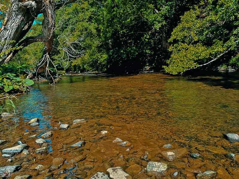 Wildnis-Trail Bach