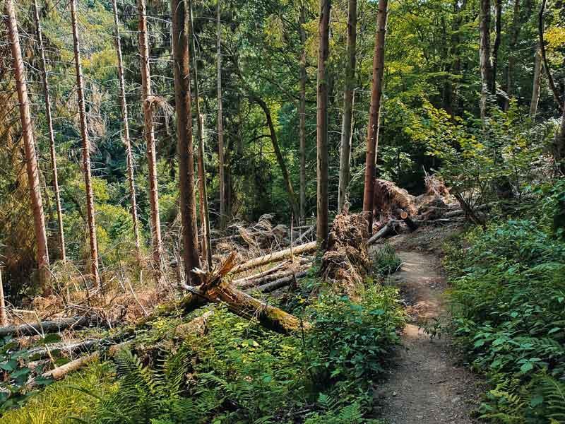Wildnis-Trail Nationalpark Eifel