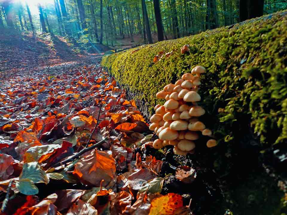 Wildnis-Trail Wald